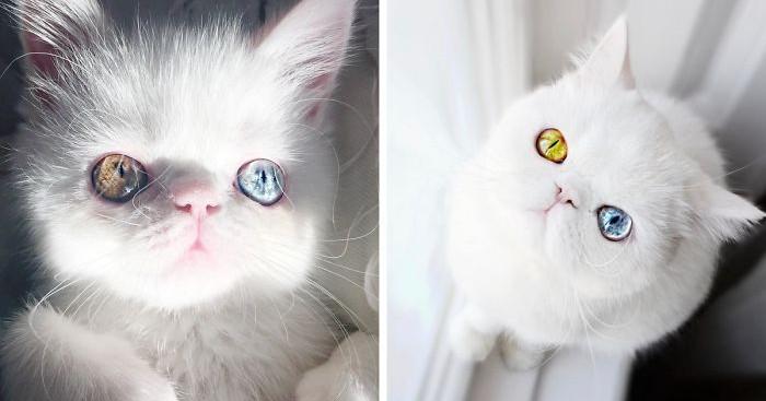 την γατούλα με τα πιο σαγηνευτικά μάτια που έχετε δει Γνωρίστε την Pam Pam γατούλα γάτες Γάτα