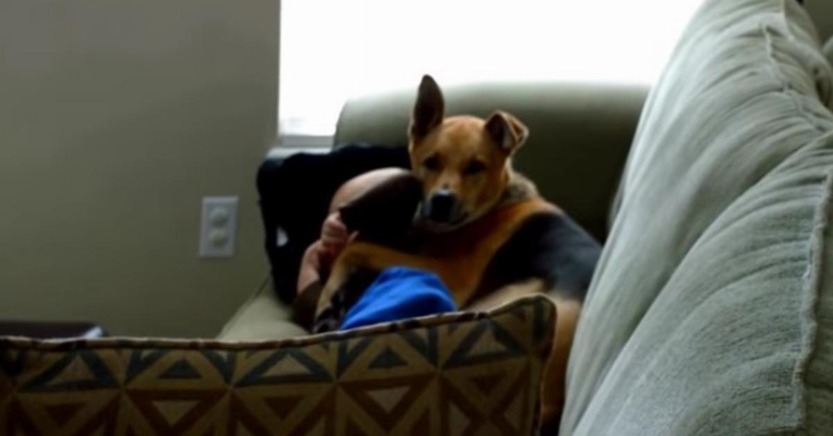 φοβήθηκε πως κάτι δε πάει καλά. Μόλις κατάλαβε ΤΙ συνέβη Σκύλος σκύλοι Όταν είδε τον σκύλο της να αγκαλιάζει το μωρό έμεινε άφωνη! είδε τον σκύλο της να αγκαλιάζει το μωρό
