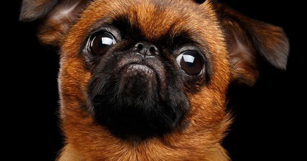 Πορτραίτα σκύλων από τον Sergey Taran