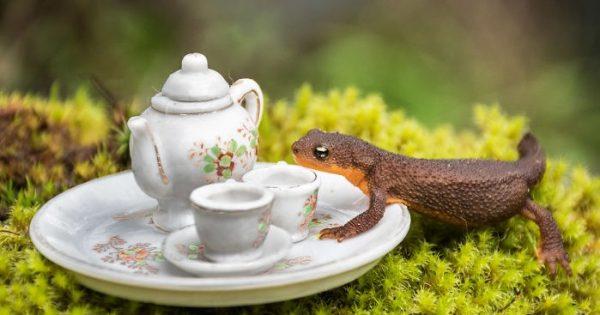 Φωτογράφος που ζει σε δάσος του Καναδά φωτογραφίζει τα διάφορα άγρια ζώα που περνάνε από τον κήπο του
