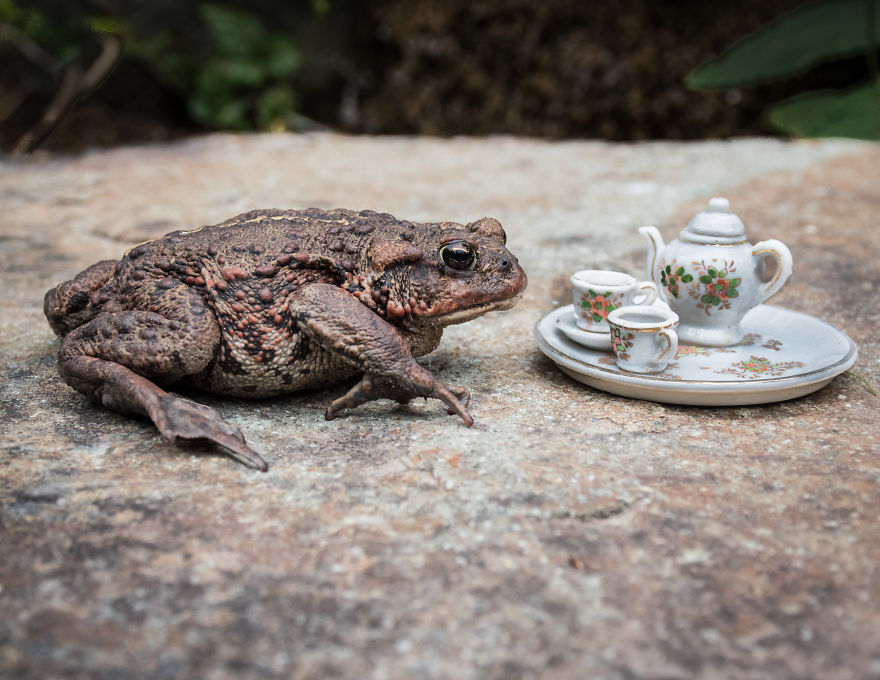 Φωτογράφος που ζει σε δάσος του Καναδά φωτογραφίζει τα διάφορα άγρια ζώα που περνάνε από τον κήπο του Άγρια Ζωή άγρια ζώα