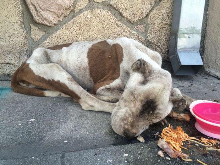 Σκύλος σκύλοι ετοιμοθάνατο σκυλί Αστυνομικοί στο Λος Άντζελες βρίσκουν ετοιμοθάνατο σκυλί σε πεζοδρόμιο και το σώζουν