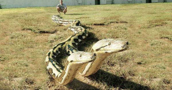 Αυτά είναι τα πιο επικίνδυνα φίδια με δύο κεφάλια (video)
