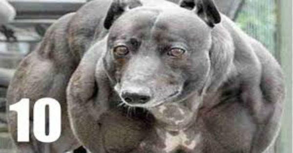 Αυτά είναι τα 10 πιο δυνατά σκυλιά του κόσμου (video)