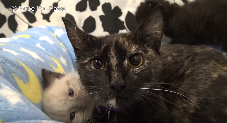 Γάτα διασώζεται από σωλήνα όπου ήταν παγιδευμένη μαζί με τα γατάκια της γάτα διασώζεται