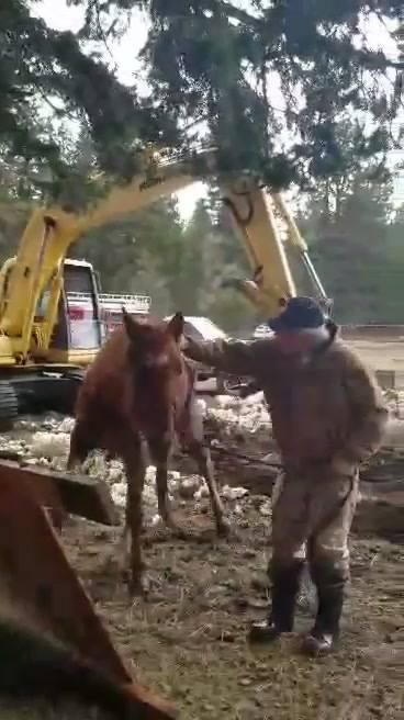 Άλογο που έπεσε σε τρύπα στο έδαφος δεν μπορεί να κρύψει την χαρά του όταν διασώθηκε άλογο