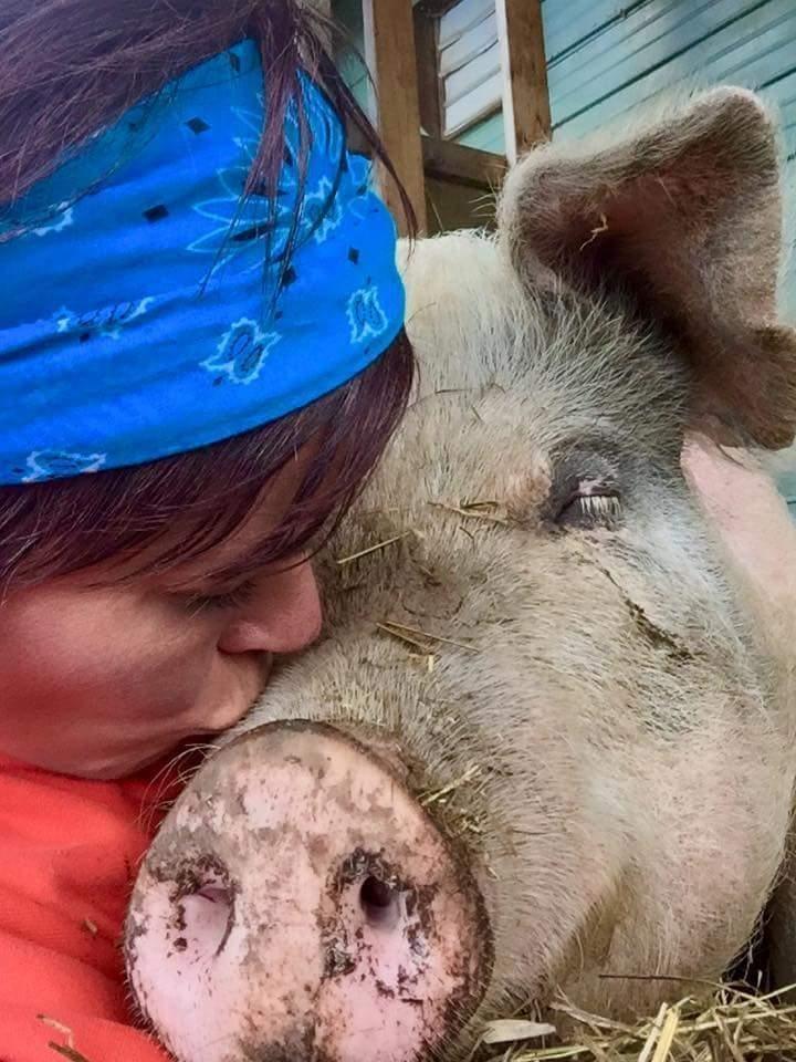 Γουρούνια γουρούνι Γουρουνάκι θυμάται ακόμα το κορίτσι που του έσωσε την ζωή πριν από χρόνια γουρουνάκι
