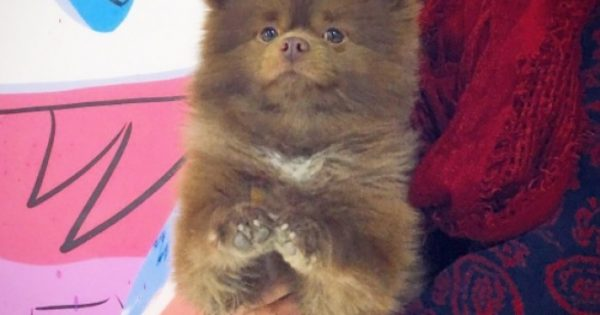 Εκτροφέας σκύλων παρατάει κουτάβι σε καταφύγιο ζώων και αυτό βρίσκει δουλειά σε γκαλερί