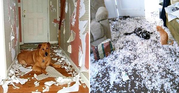 19 απελπισμένοι ίδιοκτήτες που άφησαν τα κατοικίδιά τους μόνα στο σπίτι και όταν επέστρεψαν βρήκαν τα πάντα κατεστραμμένα!