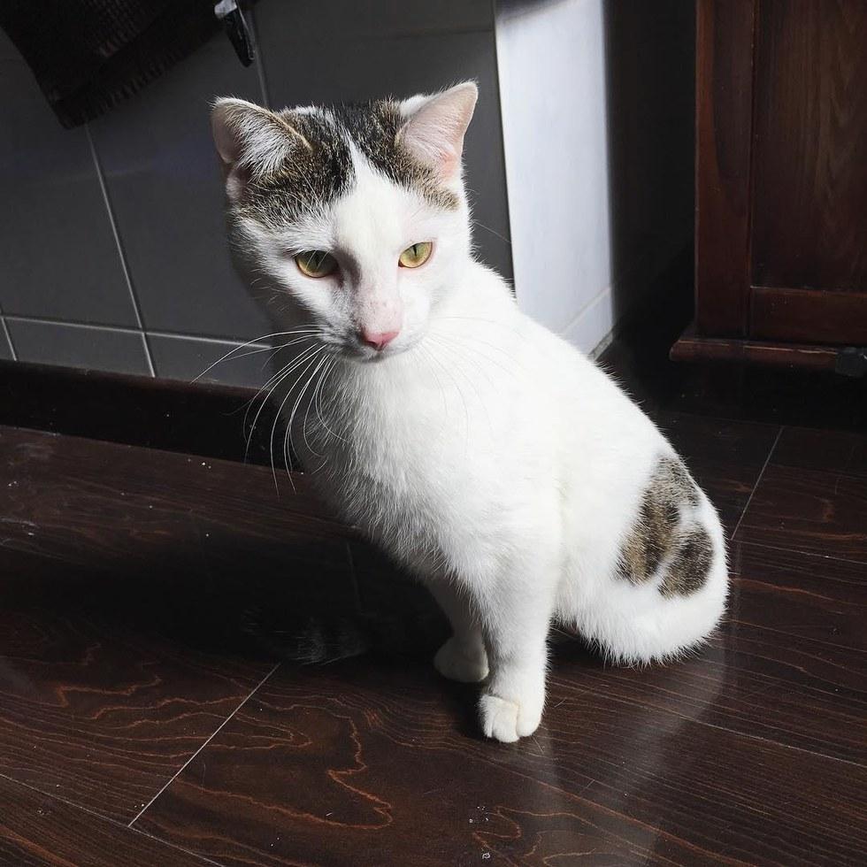 Διασώστες βρίσκουν γατάκι που του λείπουν δύο πόδια και εντυπωσιάζονται με αυτά που μπορεί να κάνει