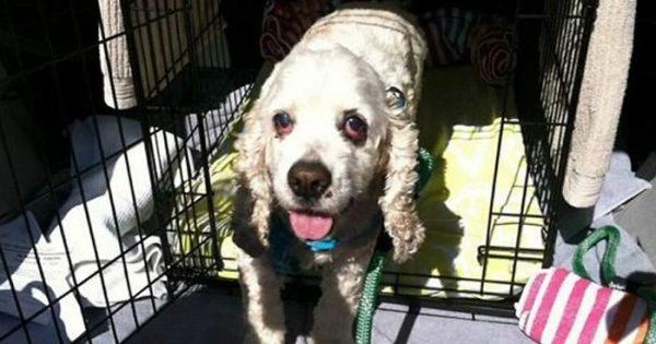 Ιδιοκτήτης 20χρονου σκύλου τον παρατάει σε καταφύγιο μόνο και μόνο επειδή είναι μεγάλος σε ηλικία