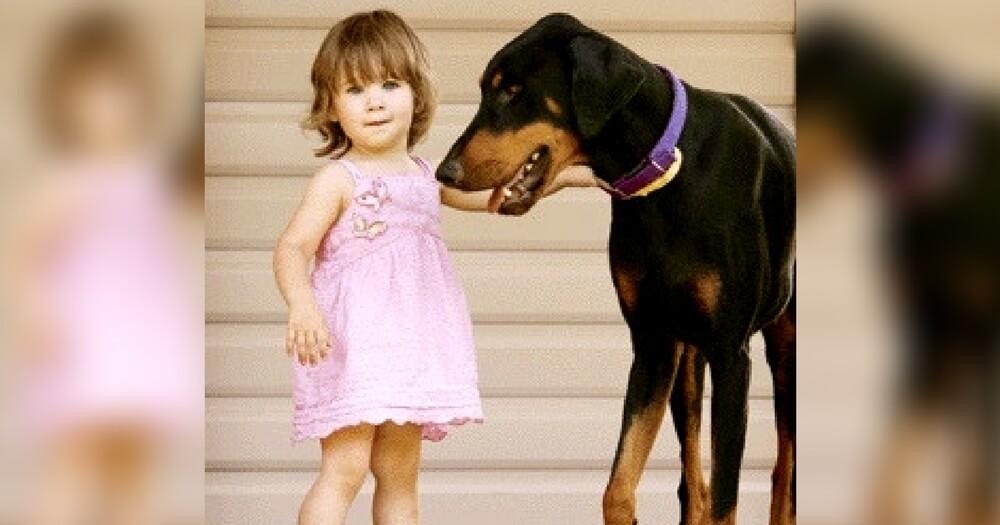 Το ντόπερμαν άρπαξε την δίχρονη κόρη της και την πέταξε μακρυά. Μόλις η μαμά κατάλαβε τον λόγο Σκύλος σκύλοι πάγωσε... ντόπερμαν