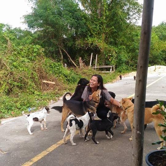Τάιζε καθημερινά αυτόν τον αδέσποτο σκύλο. Δείτε πως την ευχαρίστησε και θα δακρύσετε από συγκίνηση... Σκύλος σκύλοι σκύλο αδέσποτο σκύλο αδέσποτο
