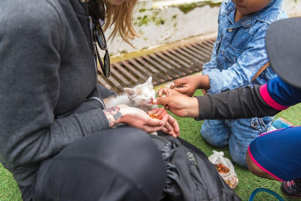 Γυναίκα που κάνει τις διακοπές της βρίσκει γατάκι που λιμοκτονεί και το παίρνει μαζί της στην επιστροφή γατί γάτες γατάκι