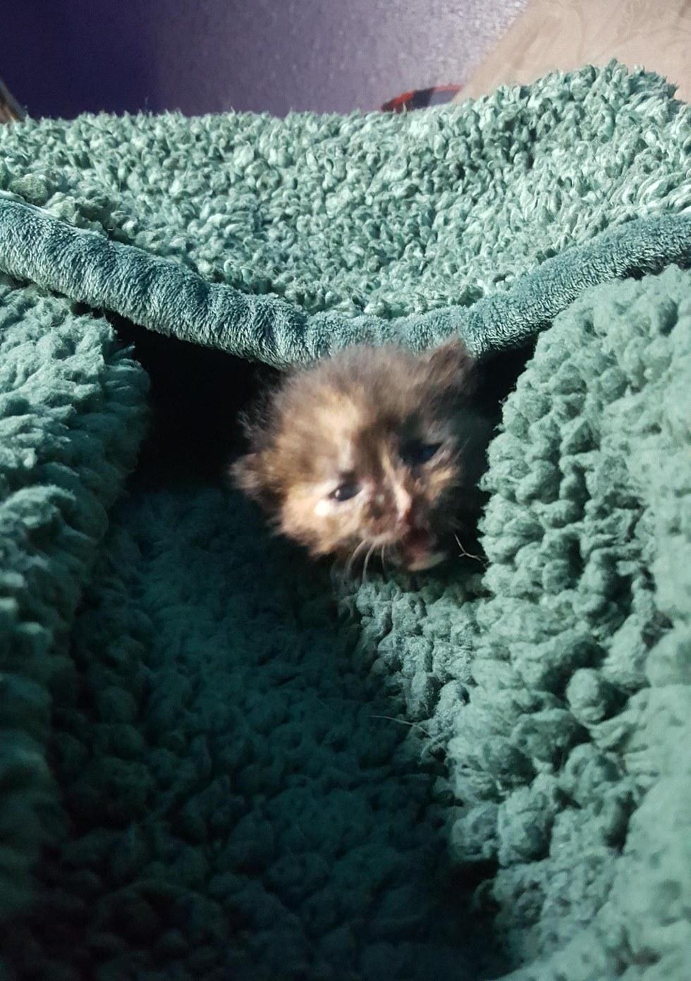 μικροσκοπικό γατάκι μικροσκοπικό γάτες γατάκι Γάτα Άνδρας βρήκε μικροσκοπικό γατάκι ενώ δούλευε πάνω σε ένα αμάξι και το διέσωσε