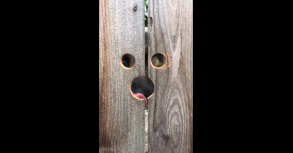 Ένας σκύλος επισκέπτεται καθημερινά το σπίτι μιας γειτόνισσας και αυτή έκανε κάτι εκπληκτικό για να τον διευκολύνει