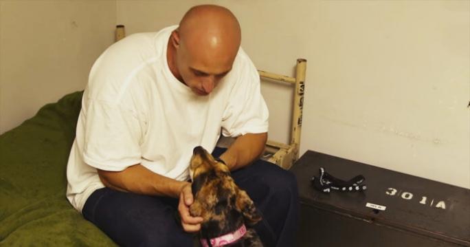 dog-in-jail-696x365