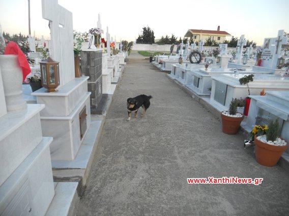 Σκύλος αφεντικό