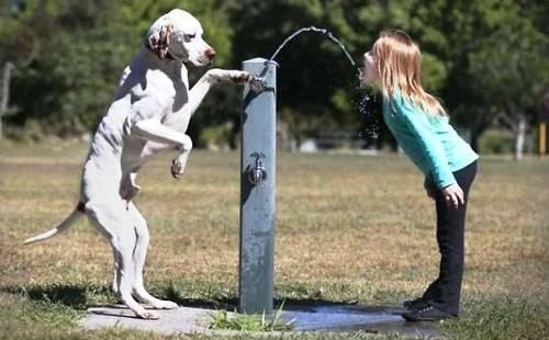 Σκύλος άνθρωποι