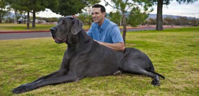 Σκύλος σκύλοι μεγαλόσωμοι σκύλοι