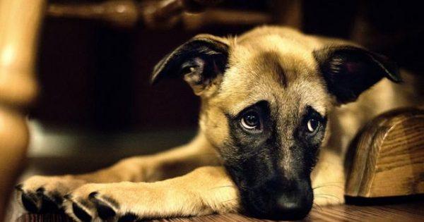 Πώς και πού θα πρέπει να καταγγείλεις κακοποίηση ζώου