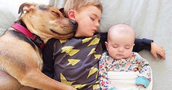 Ένα μοναδικό άρθρο για τα συναισθήματα των σκύλων που πρέπει όλοι να διαβάσουμε!