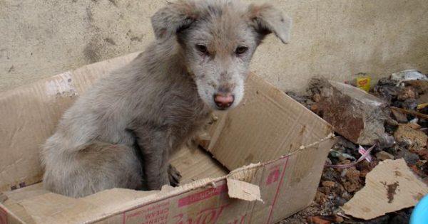 Συγκινητικό βίντεο – Πώς νιώθει ο σκύλος σου όταν τον εγκαταλείπεις