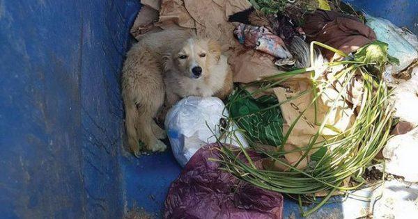 Εγκαταλείπουν κουτάβια στα σκουπίδια για να τα… «αλέσει» το απορριμματοφόρο