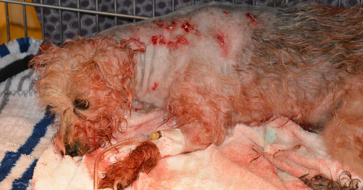 κανίς κακοποίηση σκύλων διάσωση σκύλων