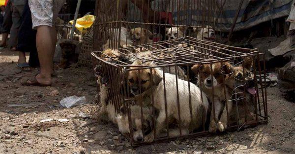 Το κρέας σκύλου επιτέλους απαγορεύτηκε στο γνωστό φεστιβάλ Γιουλίν της Κίνας