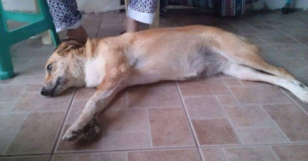 Καταδικάστηκε ο άνδρας που κλώτσησε βίαια αδέσποτη σκυλίτσα στον Πολιχνίτο Λέσβου