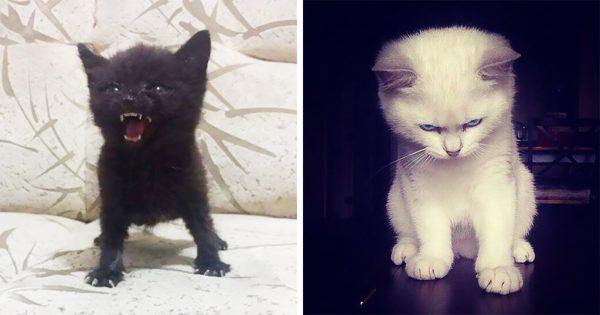 30 άγρια και μοβόρικα γατάκια που απαιτούν από εμάς να τα πάρουμε στα σοβαρά