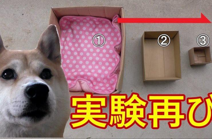Σκύλος Ο ιδιοκτήτης του όλο και μικραίνει το κουτί που κάθεται στο αυτοκίνητο. Θα τα χάσετε στο τελευταίο!