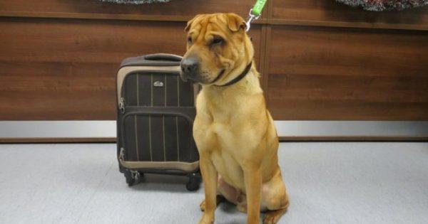 Σκύλος που εγκαταλείφθηκε σε σταθμό τρένων λατρεύει να τρέχει μαραθώνιους με τον νέο του μπαμπά