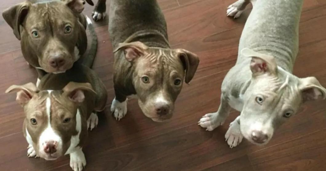 σκυλάκια εγκαταλελειμμένα σκυλάκια Αυτά τα εγκαταλελειμμένα σκυλάκια πρόκειται να έχουν μία πολύ άσχημη μοίρα. Το πιο σοκαριστικό όμως είναι...