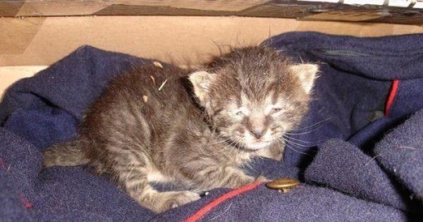 Γυναίκα σώζει γατάκι που είχε ξεπαγιάσει και του προσφέρει μια νέα ζωή