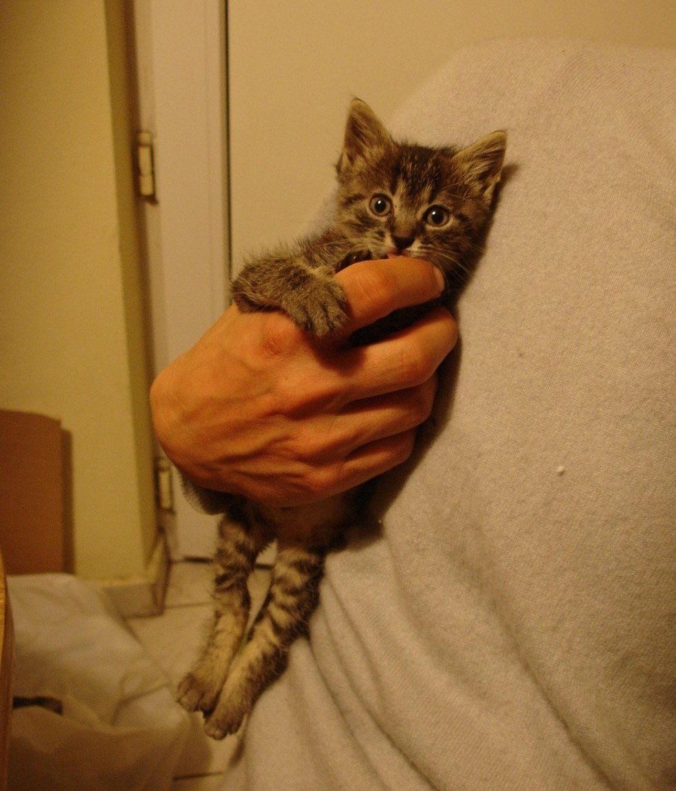 Γυναίκα σώζει γατάκι που είχε ξεπαγιάσει και του προσφέρει μια νέα ζωή γυναίκα σωζεί γατάκι γάτες γατάκι Γάτα