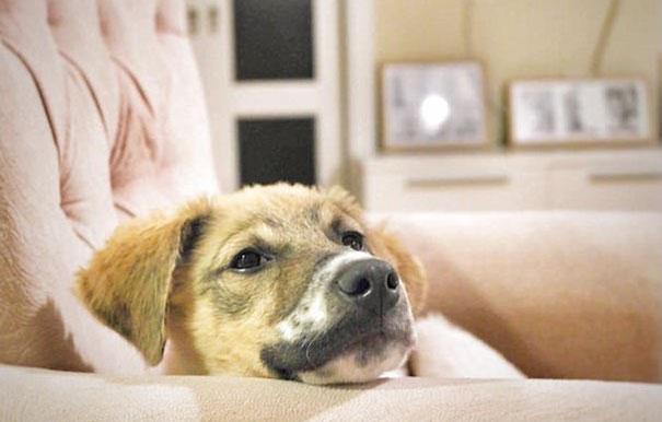 Παιδιά γέμισαν σκύλο με κόλλα και τον άφησαν να πεθάνει αλλά αυτός τα κατάφερε και έζησε γέμισαν σκύλο με κόλλα