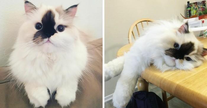 την γατούλα που μοιάζει λες και την βούτηξαν σε μελάνι και κάνει θραύση στο Instagram Γνωρίστε την Smudge γατούλα γάτες Γάτα