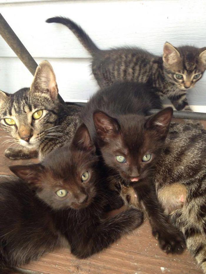 Ένας πατέρας και ο γιός του χάιδεψαν μια αδέσποτη γάτα και αυτή επέστρεψε με μια έκπληξη την επόμενη μέρα γάτες Γάτα αδέσποτο αδέσποτη γάτα αδέσποτη Αδέσποτα