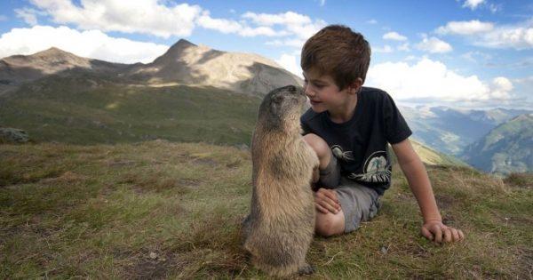 Αξιαγάπητες φωτογραφίες ενός μικρού αγοριού από την Αυστρία με μερικές μαρμότες