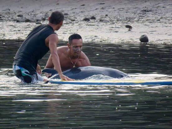 φάλαινα μωρό φάλαινας μωρό θα σας συγκλονίσει! Άκουσαν ένα μωρό φάλαινας να κλαίει και έτρεξαν αμέσως να το βοηθήσουν. Αυτό που συνέβη στη συνέχεια