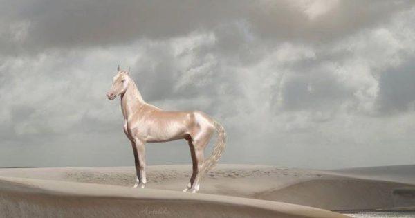15 αγέροχα άλογα που θα σας κόψουν την ανάσα με την εξωπραγματική ομορφιά τους!
