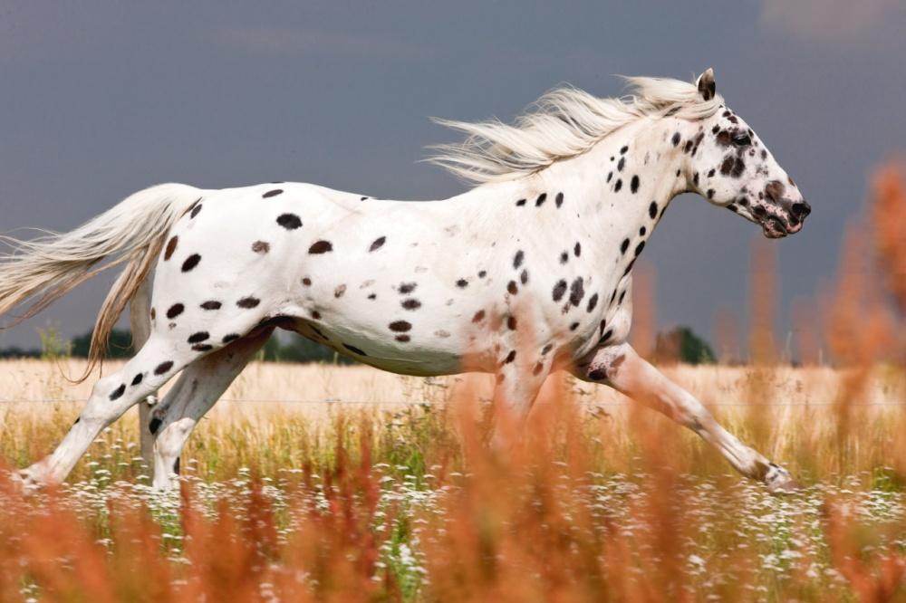 άλογο άλογα αγέροχα άλογα 15 αγέροχα αλογα που θα σας κόψουν την ανάσα με την εξωπραγματική ομορφιά τους!