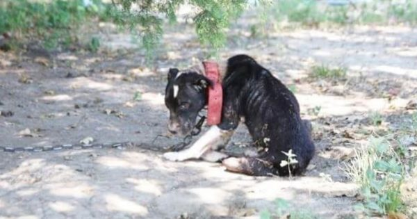 Κακοποιημένος σκύλος δεν σηκώνει ούτε το κεφάλι του από την στεναχώρια. Σήμερα όμως.. προσέξτε την ουρίτσα του!