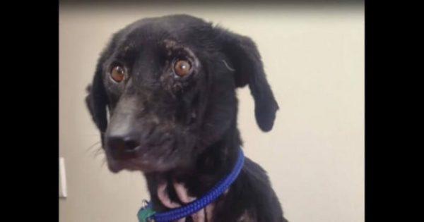 Κανείς δεν ήθελε αυτή την σκυλίτσα εξαιτίας της εμφάνισής της. Λίγο πριν της κάνουν ευθανασία όμως, έγινε το θαύμα!