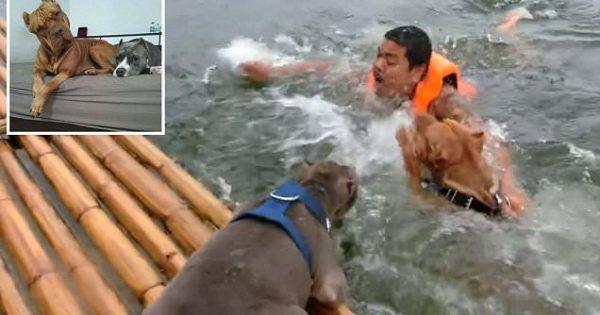 Έπεσε στο ποτάμι και ήταν έτοιμος να πνιγεί. Δείτε ΠΩΣ συνεργάστηκαν τα σκυλιά του για να τον σώσουν και θα πάθετε πλάκα!