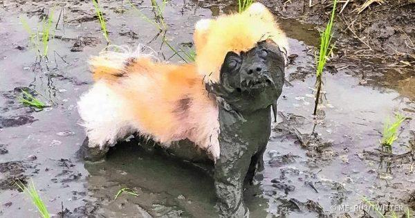 20 τρανταχτές αποδείξεις ότι τα σκυλιά είναι τα πιο αξιολάτρευτα πλάσματα πάνω στη γη!