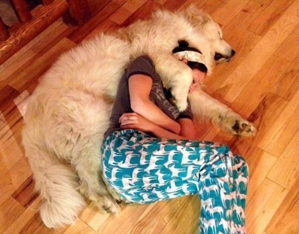 Σκύλος σκυλιά 20 τρανταχτές αποδείξεις ότι τα σκυλιά είναι τα πιο αξιολάτρευτα πλάσματα πάνω στη γη!