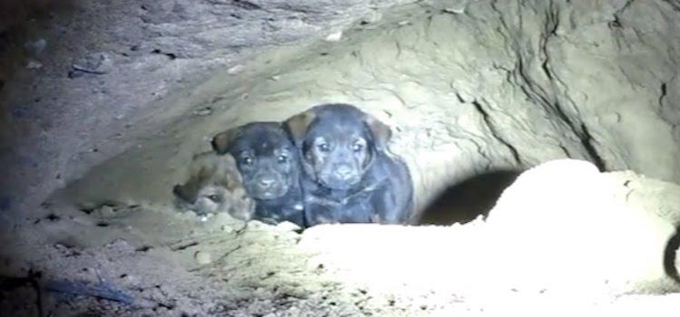 Σκύλος σκύλοι Προσπαθούσαν να σώσουν 8 εγκλωβισμένα κουταβάκια κουτάβια κουτάβι κουταβάκια κουταβάκι αλλά μόλις κοίταξαν μέσα στην τρύπα; Έπαθαν ΣΟΚ!
